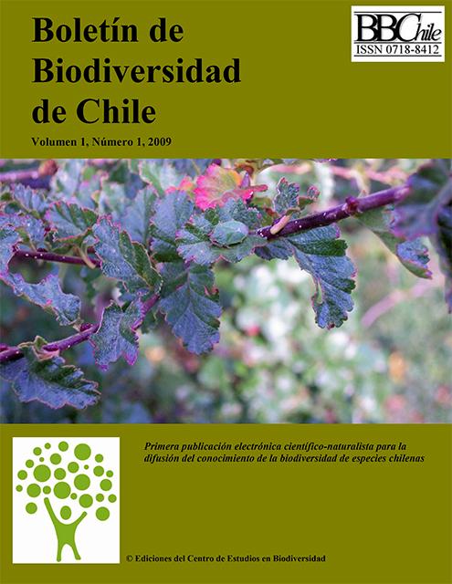 portada 2009-1